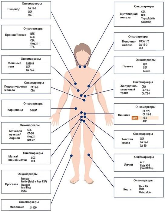 Онкомаркеры для контроля здоровья