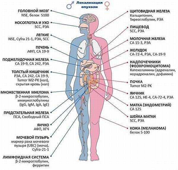 Простата при хроническом простатите