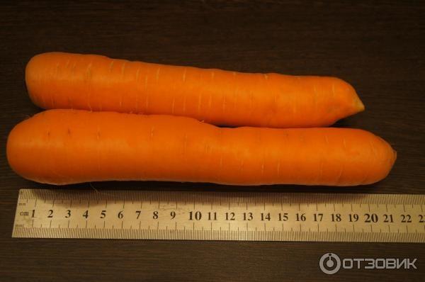 Почему у моркови сердцевина белая