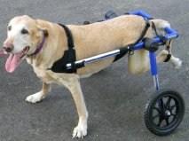 Инвалидная коляска для таксы своими руками 110