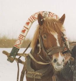 Дуга для лошади 85