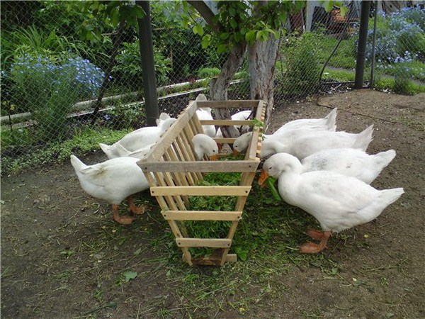 Кормушки своими руками для гусей