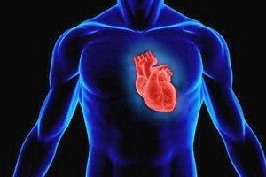 где находится сердце у человека фото у женщин