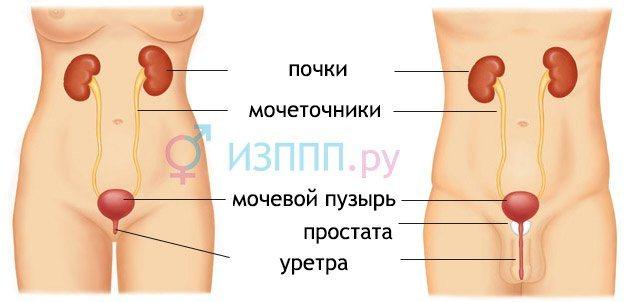 klitor-bolit-pri-mocheispuskanii