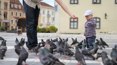 Маленькие голуби где они