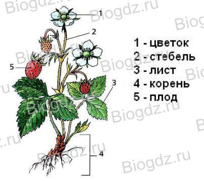 Название комнатных цветов в картинках и название 13