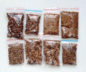 Туя из семян в домашних условиях