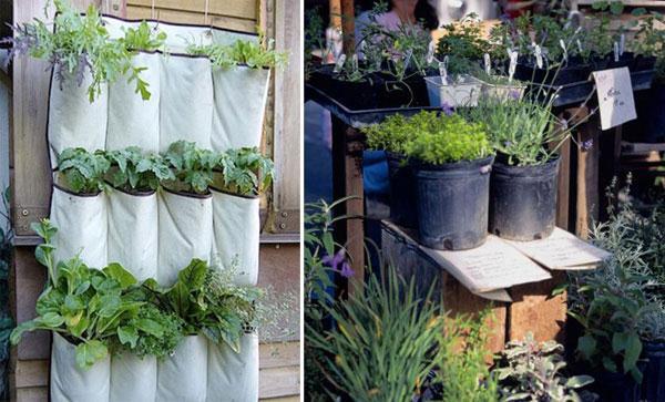 Выращивание пряности на даче