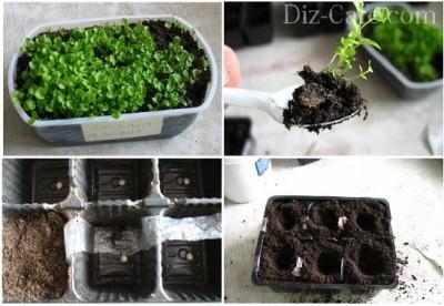 Как вырастить лобелию в домашних условиях на рассаду