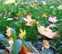 Посадка и уход за газоном в осенний период года: подкормка, аэрация и другое - My Life