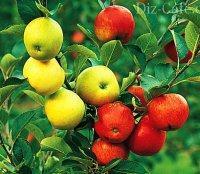 Прививка плодовых деревьев ( окулировка): обзор лучших способов - My Life