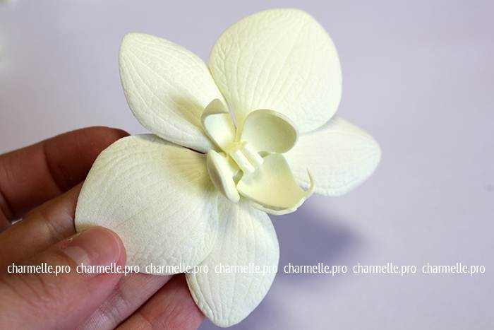 Мастер-класс «Белая орхидея Фаленопсис из фоамирана»...