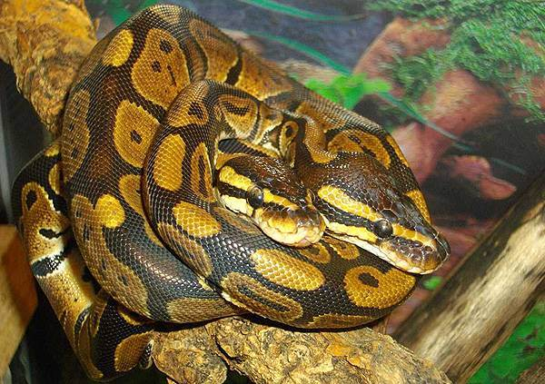 Python Range Function  pythonforbeginnerscom
