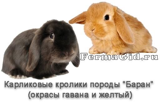Карликовые кролики в домашних условиях: содержание и уход - My Life