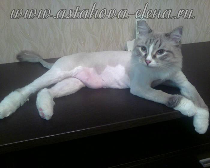 Что такое обездвиживание кота