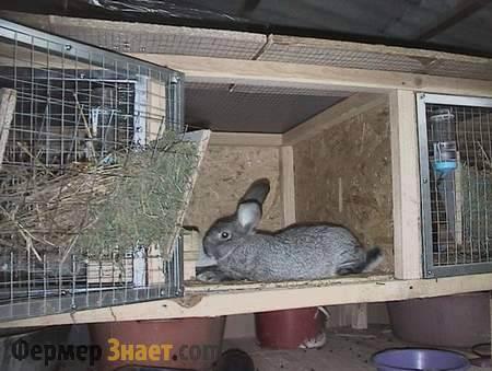 Как сделать кормушку для кролей