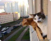 Гулять на балконе.