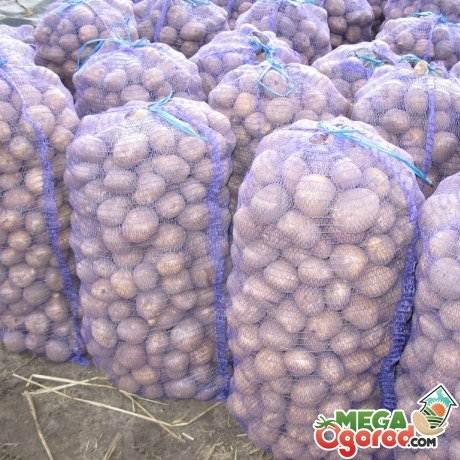 Урожайность картофеля с 1 га