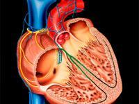 дилатационная кардиомиопатия дкмп и ее лечение