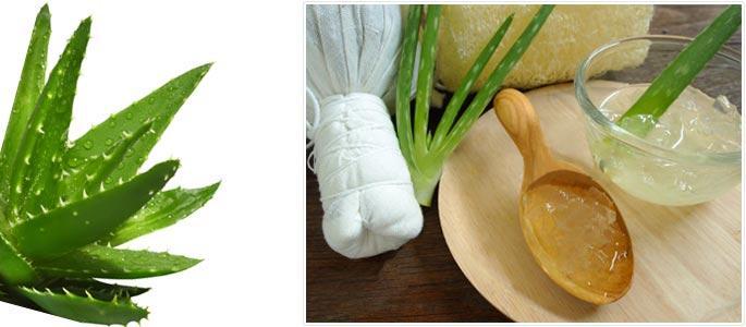 Листья алоэ применение в домашних условиях