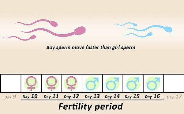 kak-opredelit-protsent-spermi